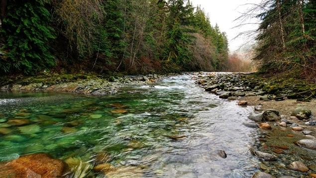Une rivière se fraie un chemin dans la forêt.