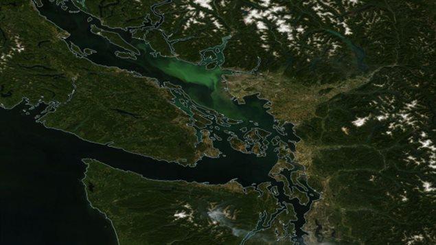 La prolifération des algues dans le détroit de Georgia entraîne une coloration verte de l'eau visible sur les photos satellites.