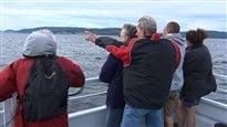 Un zodiac heurte une baleine au large de la Côte-Nord, 2occupants éjectés