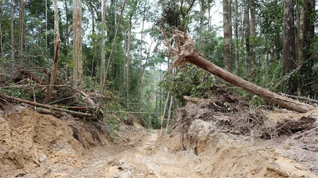 Logging roads are cut through a natural forest in part of Borneo's Sundaland biodiversity hot spot.