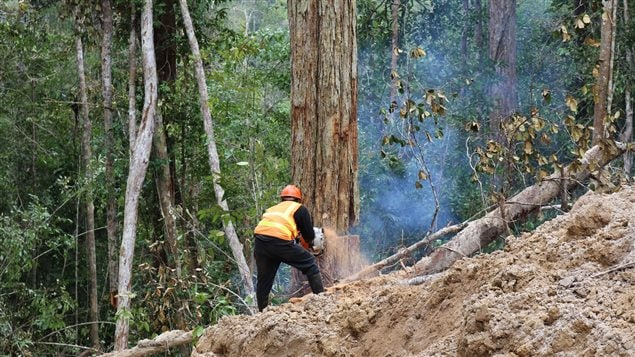 Almost all the world's species-rich regions like this natural forest in Borneo have been 'seriously altered' by human activity.