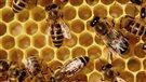 Un essaim d'abeilles sème l'émoi à Alma