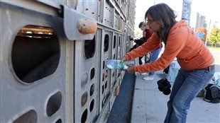Anita Krajnc (above) is currently on trial for bringing water to parched pigs. We see a dark-haired woman in an orange sweater and blue jeans feeding a bottle of water to a pig through an air hole at the back of a transport truck.