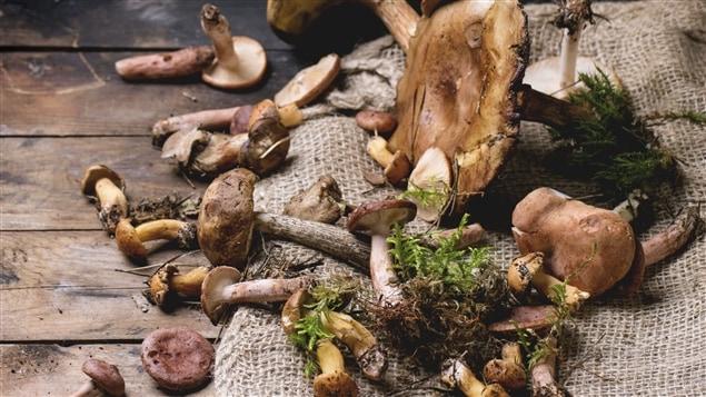 Des champignons des bois