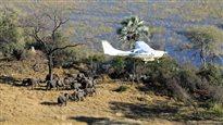 Près du tiers des éléphants des savanes décimés en Afrique