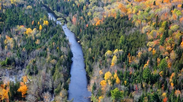 Conserving land like that around the Miramichi Watershed in New Brunswick is good for the climate and can protect communities, says conservation group.