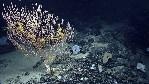 The Northwest Atlantic Ocean is changing 'fastest,' says a government news release.