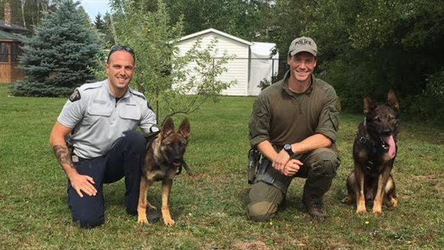 chiens_policiers