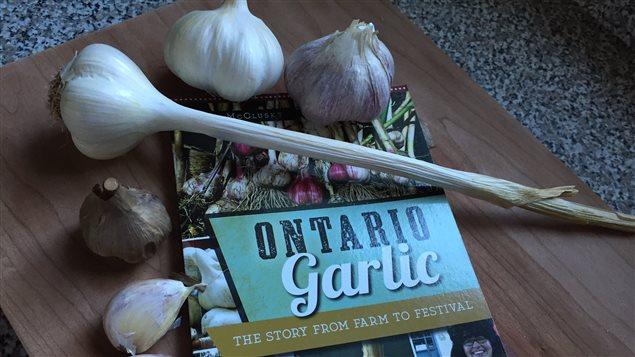 Il y a une centaine de producteurs d'ail en Ontario.