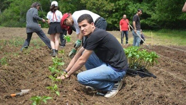 Dix familles de réfugiés syriens ont participé au projet Tula Farm cet été à Keswick Ridge non loin de la capitale provinciale, Fredericton.