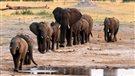 Le sort de plusieurs espèces menacées discuté à Johannesburg