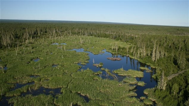 Le plus grand barrage des castors au monde se trouve dans le parc national Wood Buffalo, site du patrimoine mondial de l'Unesco.