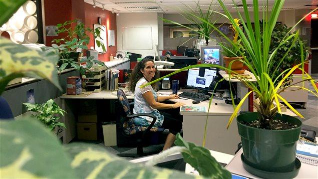 Les bienfaits des plantes vertes l 39 heure de pointe ici - Plantes de bureau sans soleil ...