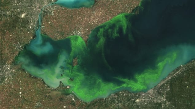 Satellite image of algae bloom on Lake Erie 2011 According to NOAA it was fed by phosphorus mainly from farm fertilizer runoff and sewage treatment plants, leaving behind toxins that have contributed to oxygen-deprived dead zones where fish can't survive. The toxins can kill animals and sicken humans. Ohio's fourth-largest city, Toledo, told residents late Saturday Aug. 2, 2014 not to drink from its water supply that was fouled by toxins possibly from algae on Lake Erie