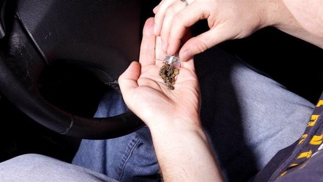 Un conducteur automobile se prépare une dose de cannabis.