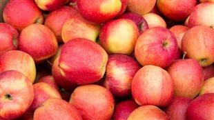 Le temps des pommes!