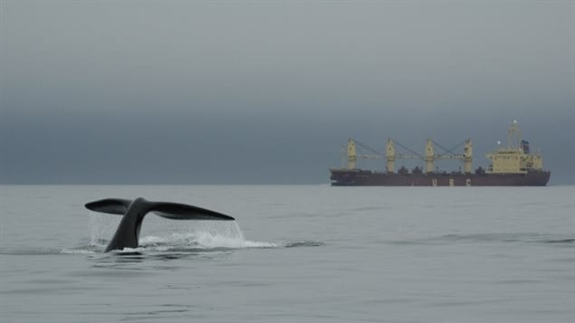 Rules have been created for shipping in the known Right whale habitat, but scientists are concerned that the whales may be moving into areas where there are no mitigation measures and ship strikes are more likely