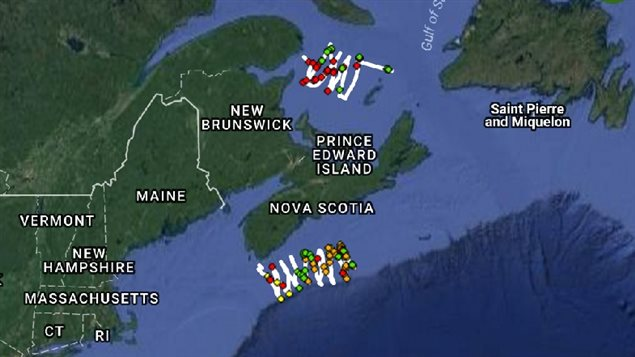 Two 'gliders' have been deployed to travel in the Gulf of St Lawrence and on the Scotian shelf off the coast of Nova Scotia. The coloured dots represent recording of different species of whale calls. This year so far, more Right whales (red dots) have been heard in the Gulf, than their usual summer location off Nova Scotia