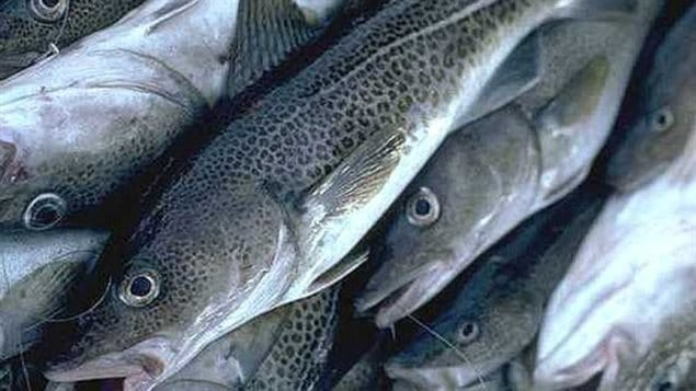 Critically depleted stocks are still being fished, says a new report.