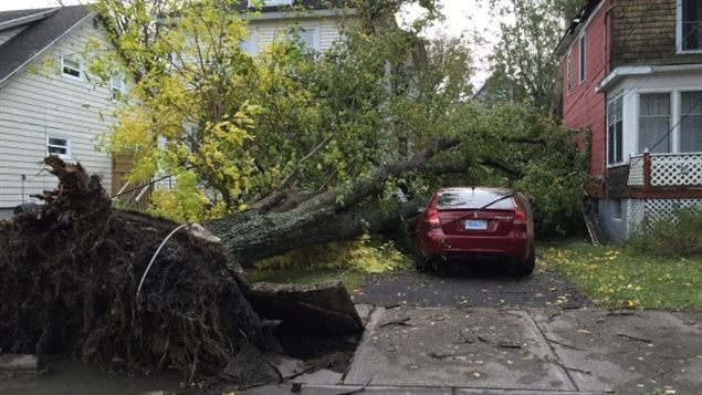 Neither cars nor houses were safe from falling trees on Sydney's Union Street during Monday's storm.