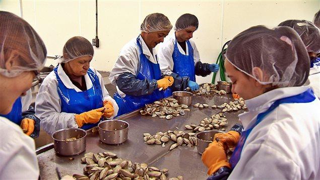 Des travailleurs dans une usine de transformation de myes