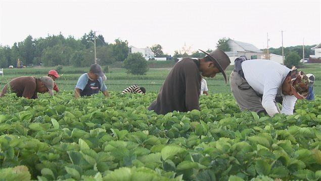 La actividad agrícola es un ejemplo claro de la importancia de la mano de obra inmigrante.