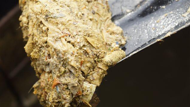 Un amoncellement dégoûtant de graisse et de déchets récolté dans un égout.