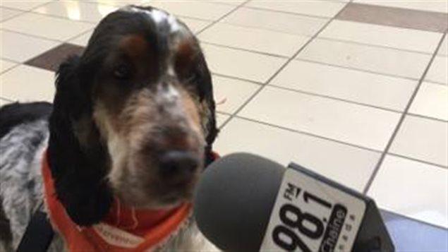 Le chien Monsieur Lincoln de la Patte Complice lors du Salon canin de Sept-�les