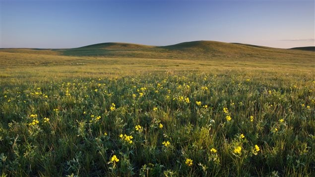 Grasslands are home to unique plants and animals.
