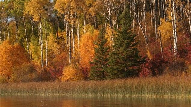 Canada's grasslands include river valleys and wetlands.