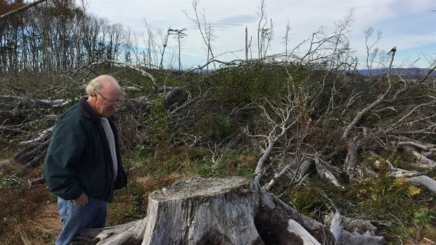 Joggins resident Jim Hamilton surveys what used to be a forest and wonders why the province doesn't replant clearcuts. Another resident now says, its just a jumble of stumps and fallen trees, unusable for anything for the next 30 years.