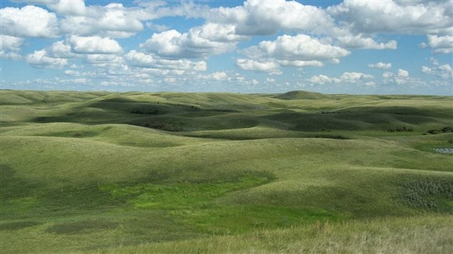 About 70 per cent of Canada's grasslands have been lost.