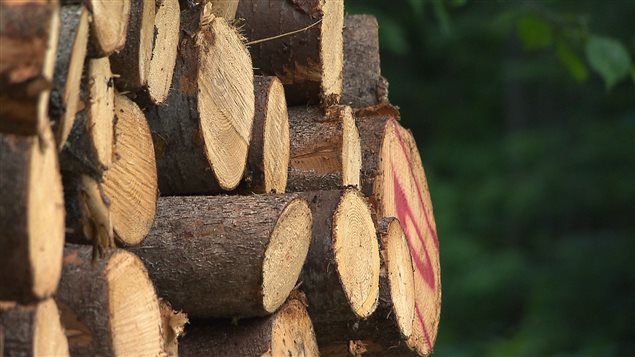 Des billots de bois cordés.