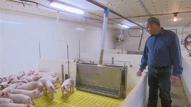 Cécilien Berthiaume, un éleveur de porcs, espère que l'accord Canada-Union européenne lui permettra de gonfler ses revenus.