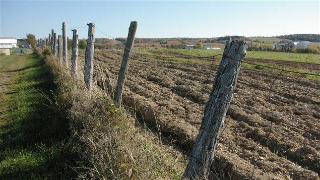 Champs agricoles à Saint-Adelme, en Matanie, au Bas-Saint-Laurent.