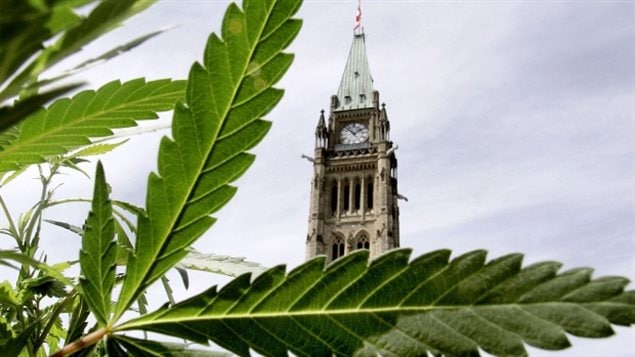 A government task force on marijuana has released its 106 page report today with recommendations for the government's plan to eventually legalize marijuana, possibly in 2017