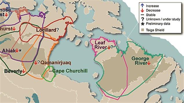 The George River herd migrates between Labrador and Quebec, while the Leaf River herd migrates within Quebec.