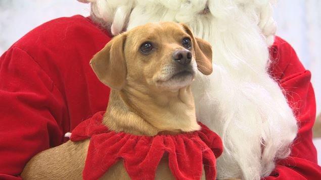 Un chien avec le Père Noël
