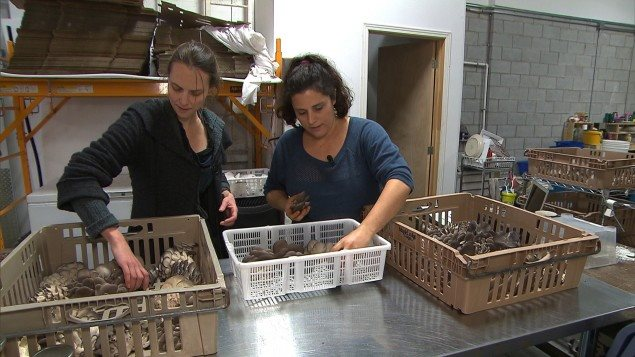 Co founders (L) Lysiane Roy Maheu and (R)Dominique Lynch-Gauthier in their warehouse operation in central Montreal