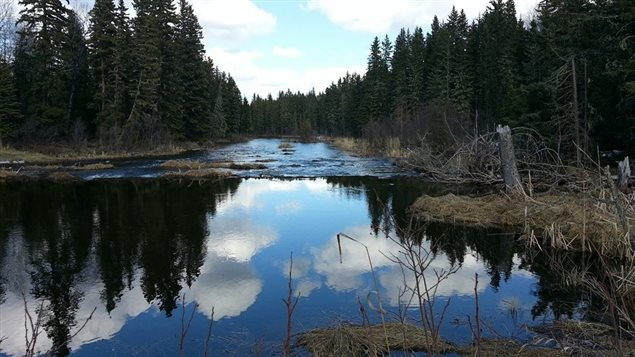 Une piste de randonnée dans un Parc national du Canada