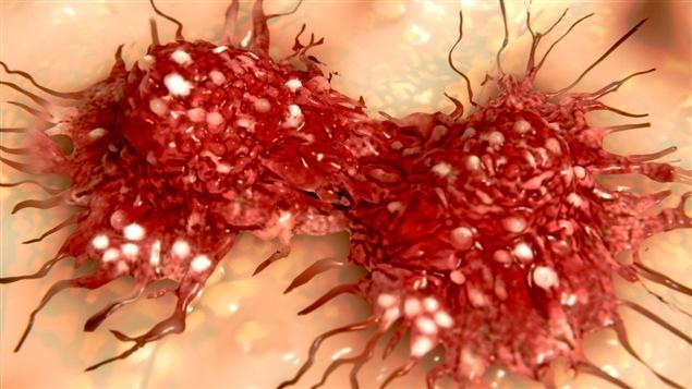 Division d'une cellule cancéreuse