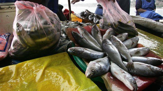 Alimento marino, cada vez más escaso.