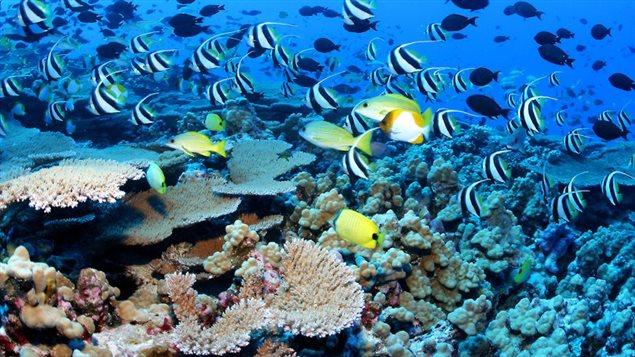 Une réserve marine
