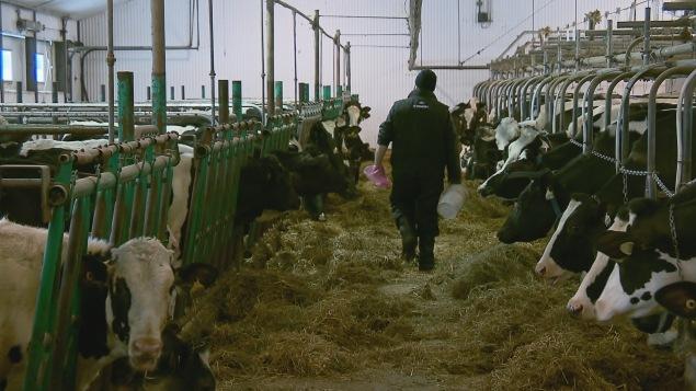 De l'aide pour les agriculteurs en détresse
