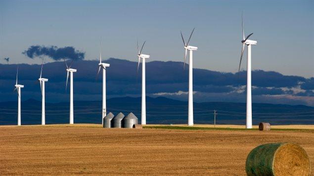 Des éoliennes dans un champ.