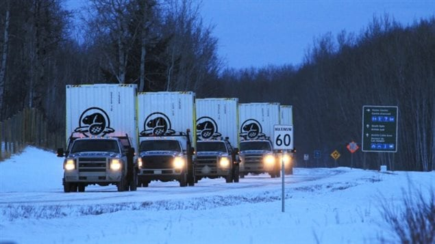 First, trucks transported the 16 bison in their shipping containers.