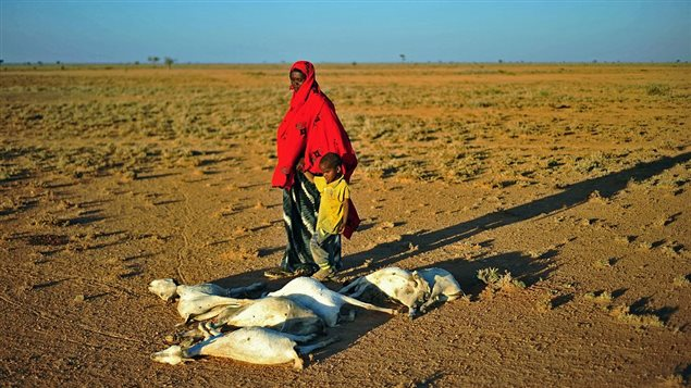 A woman and a boy walk past a flock of dead goats in a dry land close to Dhahar in Puntland, northeastern Somalia, on December 15, 2016. Drought in the region has severely affected livestock for local herdsmen.