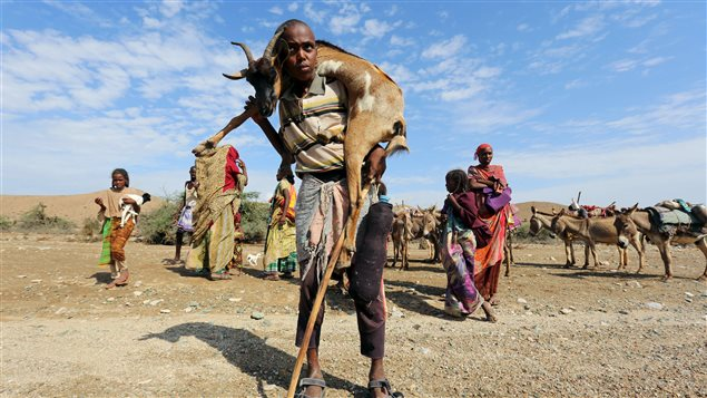 A boy carries a goat near Jidhi town of Awdal region, Somaliland April 10, 2016. Across the Horn of Africa, millions have been hit by the severe El Nino-related drought.