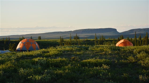 Botanists camped in remote locations to collect samples of hundreds of plant species.