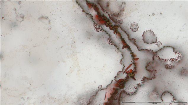 Des micro-organismes ont laissé des traces de leur existence dans des micro-filaments que l'on retrouve dans la ceinture de roches vertes Nuvvuagittuq, dans le nord du Québec.